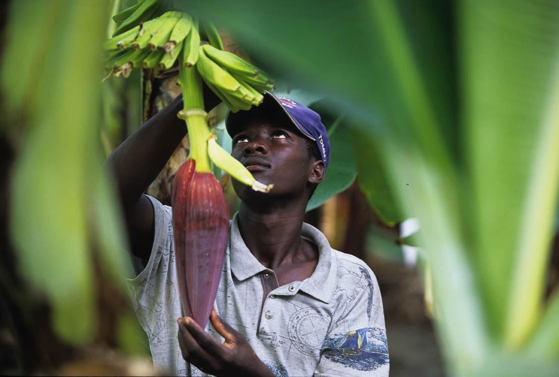 Podpora Fairtrade v krajinách V4