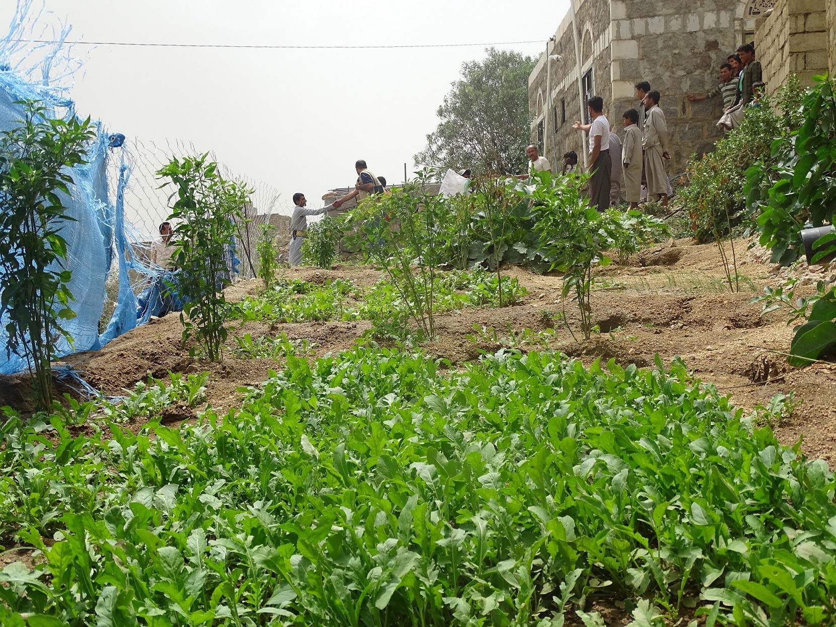 Jemenčanov trápia kobylky