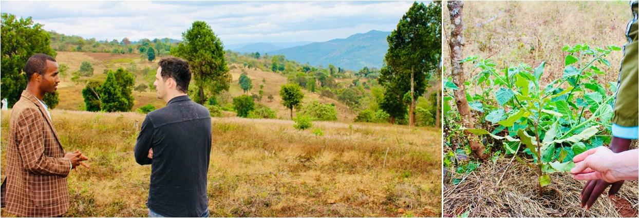 Nove stromy v Etiopii 1