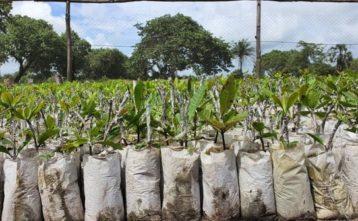Milión stromov pre Afriku