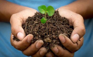 Stromami proti zmene klímy a chudobe