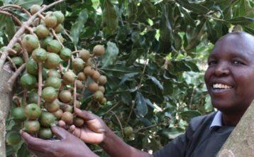 Fair Trade pomáha k svojpomoci